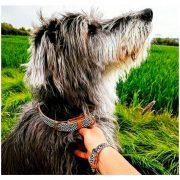 dog-collar-arguscollar-black-white-min